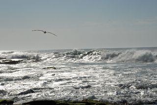 San Diego 2010 704